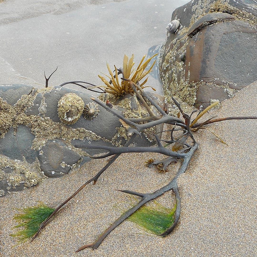 mini works of art at the beach
